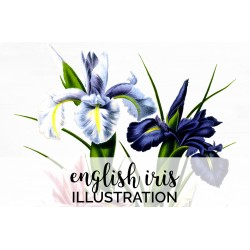 English Iris