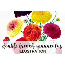 Double French Ranunculus Bouquet