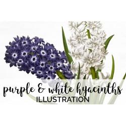 Purple and White Hyacinths