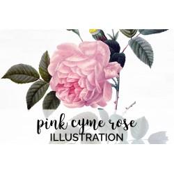 Pink Cyme Rose