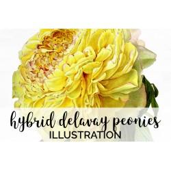 Hybrid Delavay Peonies
