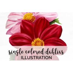 Single Colored Dahlias