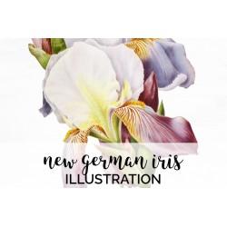 New German Iris