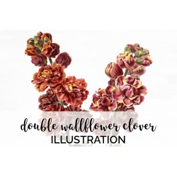 Double Wallflower Clover
