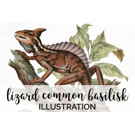 Lizard Common Basilisk