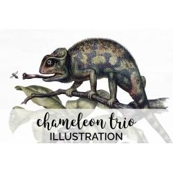 Chameleon Trio