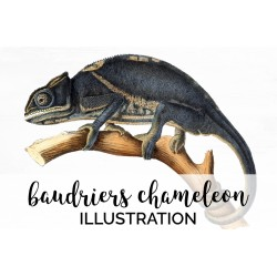 Baudriers Chameleon