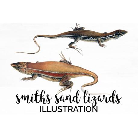 Smiths Sand Lizard