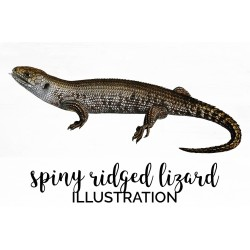 Spiny Ridged Lizard