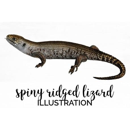 Spiny Ridged Lizard