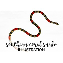 Southern Coral Snake