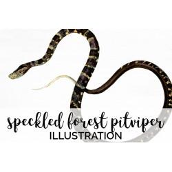 Speckled Forest pitviper