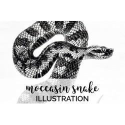 Moccasin Snake