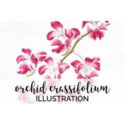 Pink Orchid Aerides Crassifolium