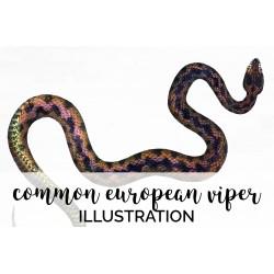 Snake Common European Viper