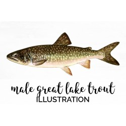 Male Great Lake Trout