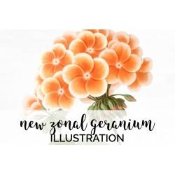 New Zonal Geranium