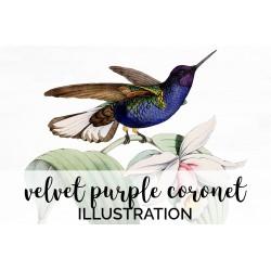 Velvet Purple Coronet