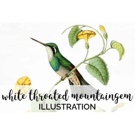White Throated Mountaingem