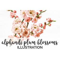 Alphandi Plum Blossoms