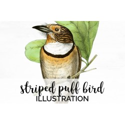 Striped Puff Bird