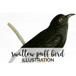 Swallow Puff Bird