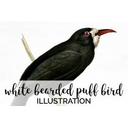 White bearded Puff Bird