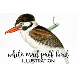 White Eard Puff Bird