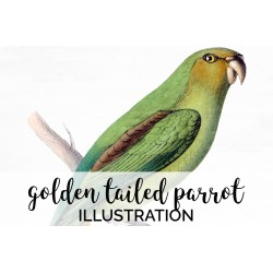 Golden Tailed Parrot