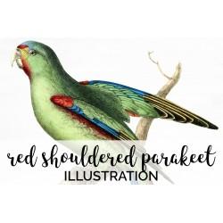 Red Shouldered Parakeet