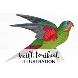 Swift Lorikeet