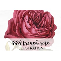 1889 French Rose