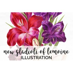 New Gladioli of Lemoine