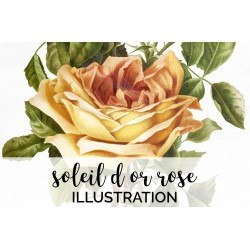 Soleil d Or Rose