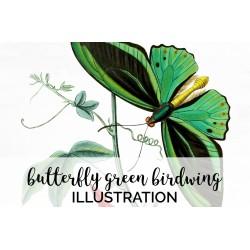 Butterfly Green Birdwing