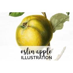 Oslin Apple