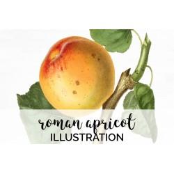 Roman Apricot