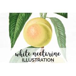 White Nectarine