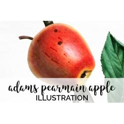 Adams Pearmain Apple