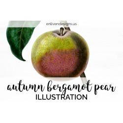 Autumn Bergamot Pear