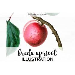 Breda Apricot
