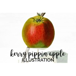 Kerry Pippin Apple