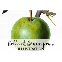 Belle Et Bonne Pear