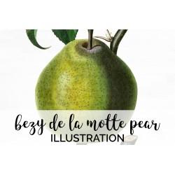 Bezy De La Motte Pear