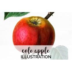 Cole Apple