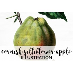 Cornish Gilliflower Apple