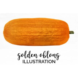 Golden Oblong