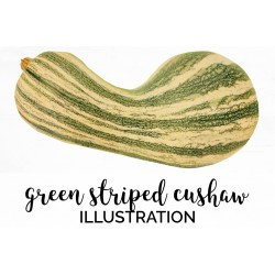 Green Striped Cushaw