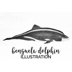 Benguela Dolphin