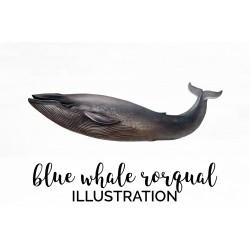 Blue Whale Rorqual
